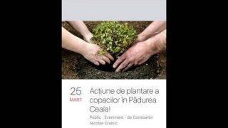 plantare-1