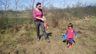 plantare-copaci-1