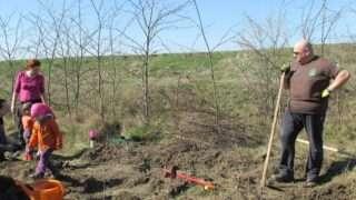 plantare-copaci-21