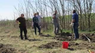 plantare-copaci-24