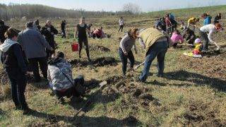 plantare-copaci-27