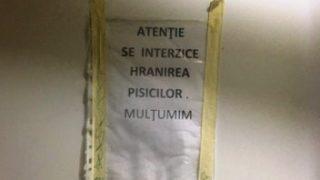 spitalul_judetean_ara-1