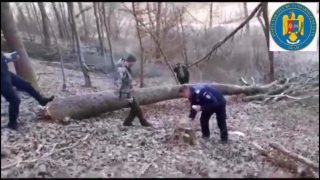 hoti-lemne-1