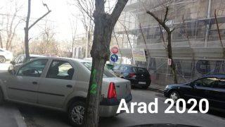 copaci-arad1