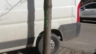 copaci-arad5