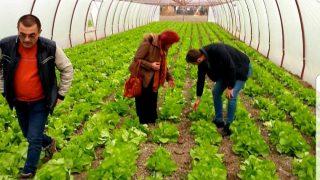 alda-agricultura-1