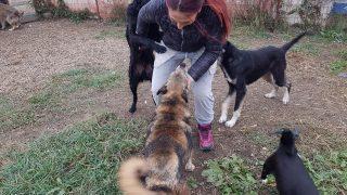 iasmina_adapost_caini-26