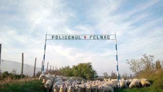 poligonul_felnac
