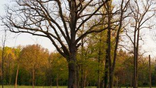 Aleea-stejarilor-Parcul-_ANG4109